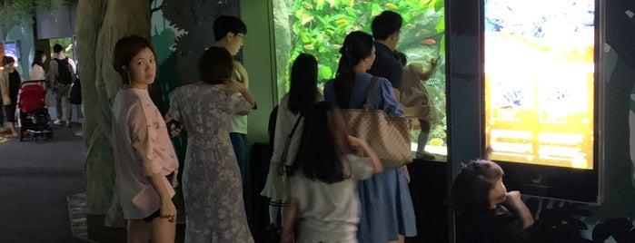 Lotte World Aquarium is one of Children.