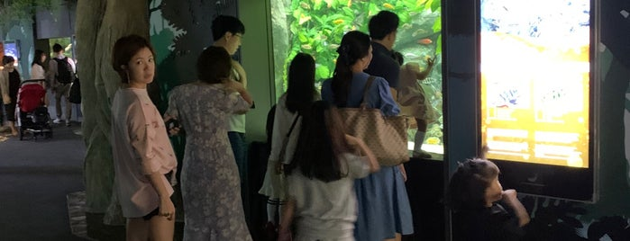 Lotte World Aquarium is one of Seoul.