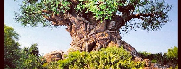 Disney's Animal Kingdom is one of Florida.