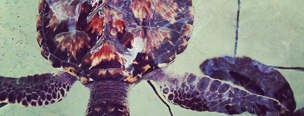 Bolong' s turtle sanctuary Gili meno is one of Gili.