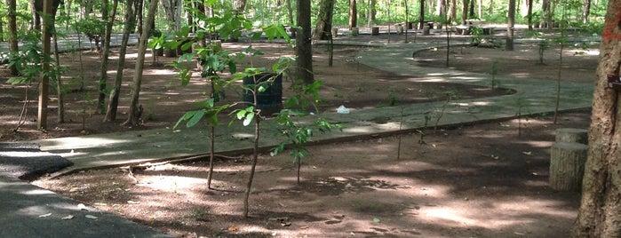 สวนรุกขชาติถ้ำจอมพล is one of ราชบุรี.