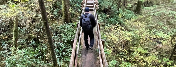 Rainforest Trail is one of West Van Island.