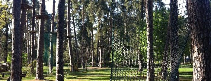 Мотузковий парк «Seiklar» is one of Развлекательные 👾.