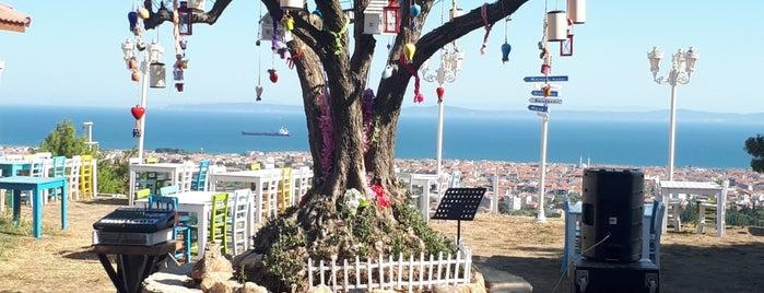 Saraybayırı Restaurant & Otel is one of TEKİRDAĞ LEZZETLERİ.