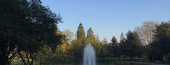 Lago de la Universidad is one of Lugares favoritos de Manuel.