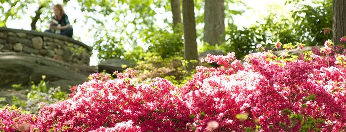 The New York Botanical Garden is one of Summer Outdoor Activities in NYC.