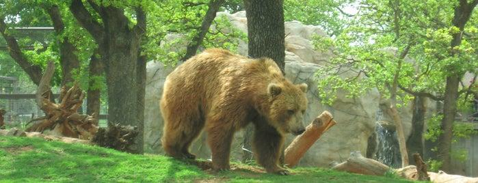 The Oklahoma City Zoo is one of Oklahoma City OK To Do.