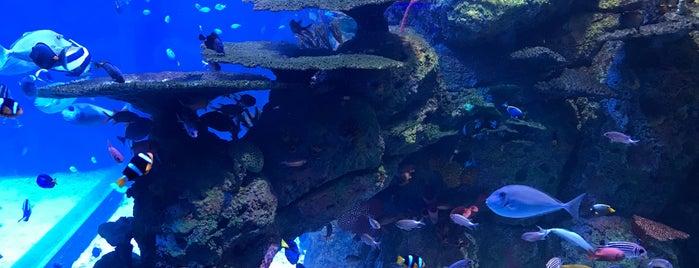 Jakarta Aquarium is one of Jakarta.