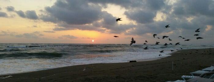 Long Beach is one of Batı Karadeniz Yemek-Plaj.