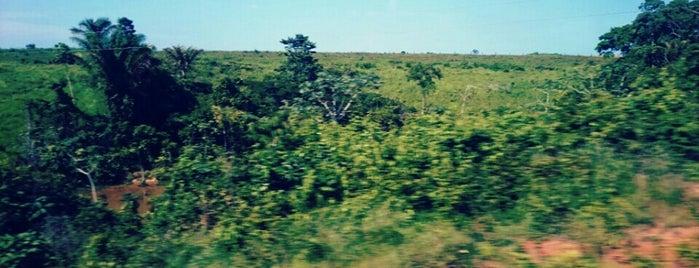 Terra Nova do Norte is one of Mato Grosso.