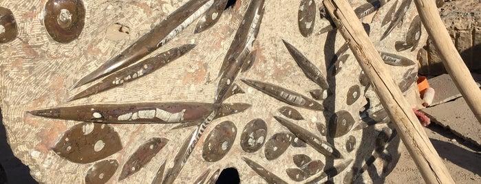 macro fossiles kasbah is one of Morocco 🇲🇦.