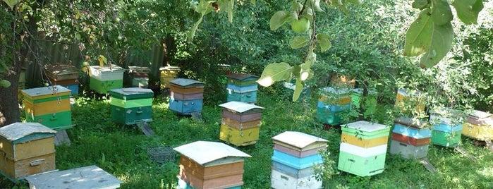 Мёд с частной пасеки is one of Posti salvati di Capitalsstar🔥🔥🔥.