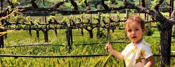 Kieu Hoang Winery is one of Napa.