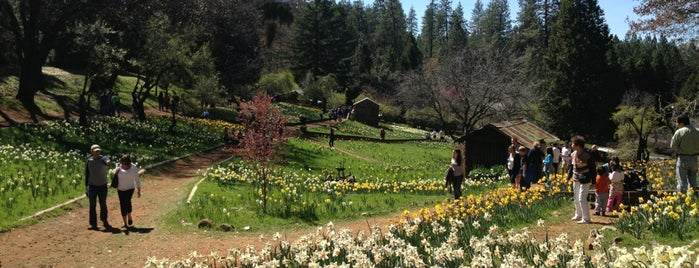 Daffodil Hill is one of The Great Outdoors!.