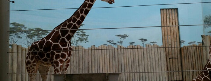 Brookfield Zoo is one of Hang With Baby Giraffes and Giant Pandas.