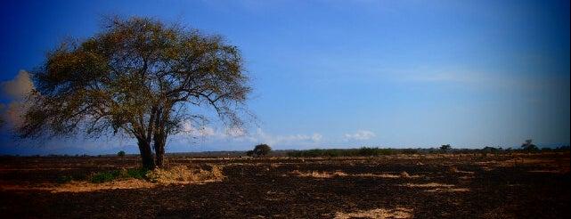 Taman Nasional Baluran (Baluran National Park) is one of National Parks.