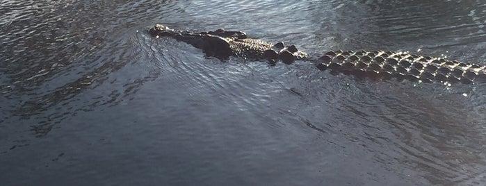 Kakadu National Park is one of Australia bucket list.