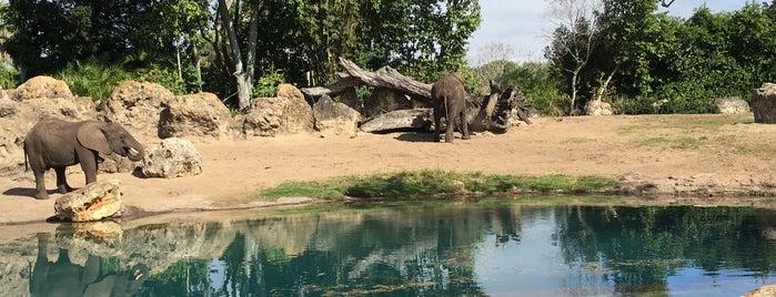 Disney's Animal Kingdom is one of Lugares favoritos de Gio.