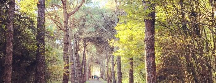 Atatürk Arboretumu is one of Tempat yang Disukai Kubra.