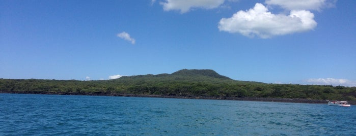 Islington Bay, Rangitoto Island is one of Auckland.