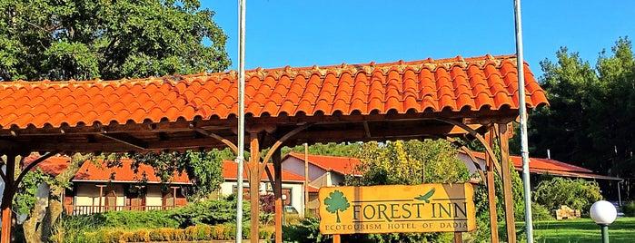 forest inn is one of Orte, die Giorgos gefallen.
