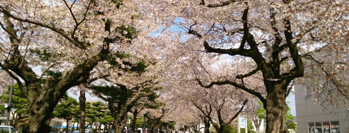 十和田市官庁街通り is one of Locais curtidos por 2.