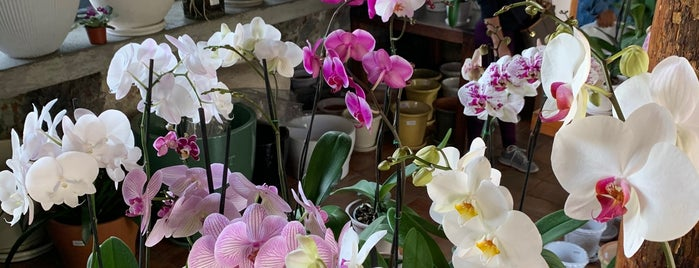Flor Y Miel is one of Lugares favoritos de Ivan.