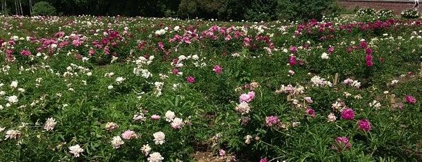 Ботанический сад is one of Posti che sono piaciuti a Alexander.