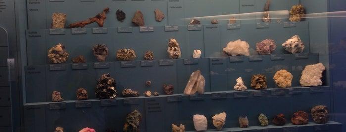 Natur-Museum is one of Locais salvos de Meg.