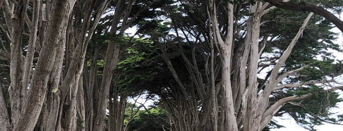 Cypress Tunnel is one of San Francisco.