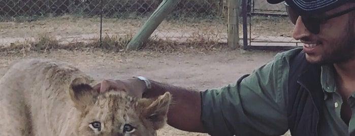 Lion And Safari Park is one of Meus locais preferidos.