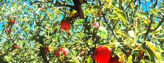 Los Rios Rancho is one of Excellent Farms for Apple Picking.