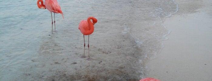 Flamingo Beach is one of A-B-C Islands.