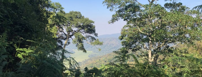 Bwindi Impenetrable National Park is one of Alanさんのお気に入りスポット.