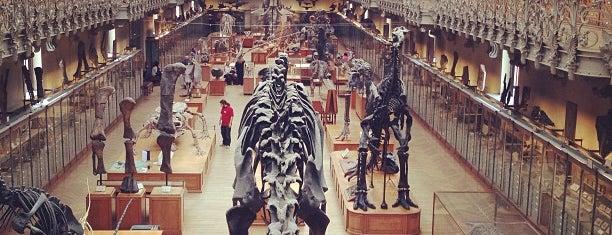 Galerie de Paléontologie et d'Anatomie comparée is one of ~ curiosités /UK|FR|PT|etc.