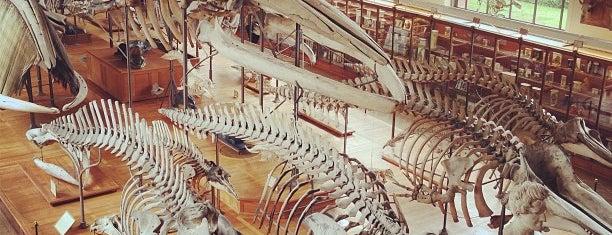 Galerie de Paléontologie et d'Anatomie comparée is one of Paris for Mike.