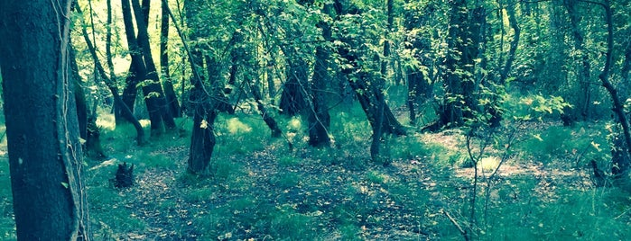 Köyceğiz sığla ormanı is one of Posti salvati di Taner.