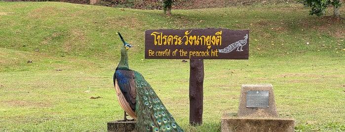 Doi Phu Nang National Park is one of พะเยา แพร่ น่าน อุตรดิตถ์.