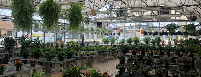 Saunoris Garden Center is one of favorites 2.