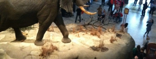 Smithsonian National Museum of Natural History is one of Top Natural History and Science Museums.