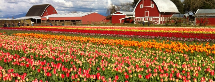 Tulip Town is one of Lugares favoritos de Jeff.