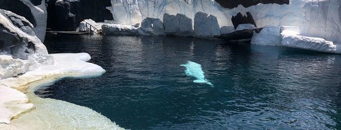 Beluga Whale Interaction Program is one of Posti che sono piaciuti a Edzel.