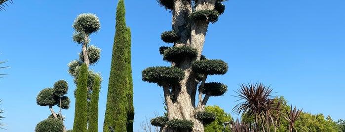Uzbaş Arboretum is one of to go.