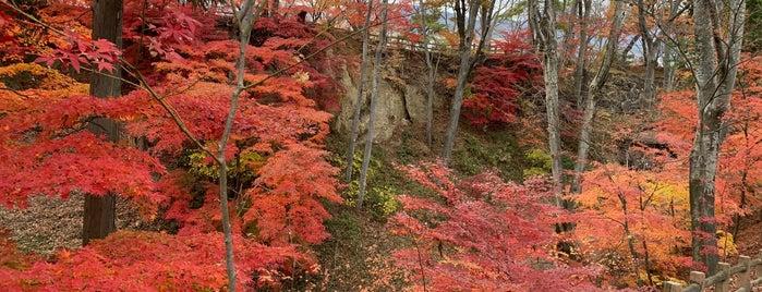 小諸市動物園 is one of สถานที่ที่ Masahiro ถูกใจ.