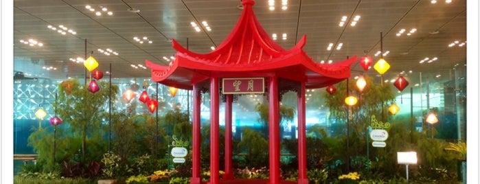 Flughafen Singapur Changi (SIN) is one of Orte, die Arie gefallen.