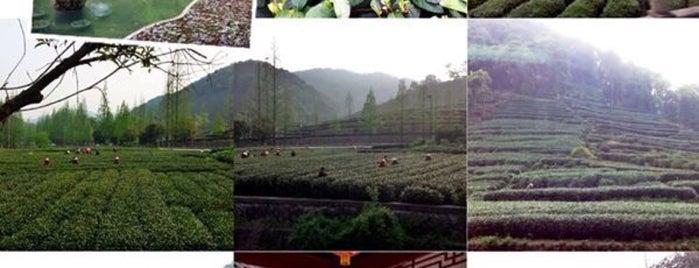 Mei Jia Wu Tea Village is one of สถานที่ที่ Arie ถูกใจ.