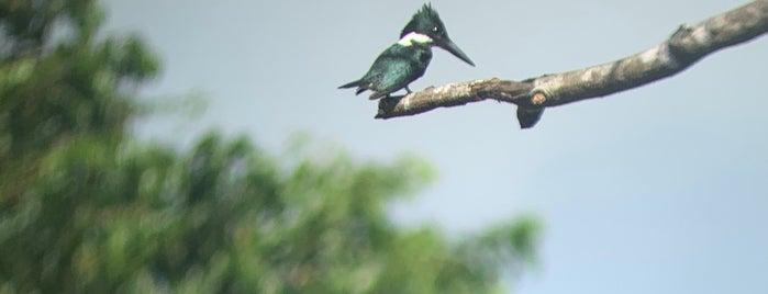 Parque Nacional Corcovado is one of Costa Rica.