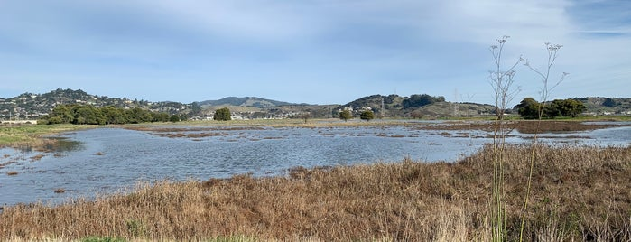 Corte Madera Marsh Ecological Preserve is one of Arthur's places to visit.