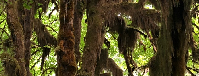 Hall Of Mosses is one of Olympic National Park.