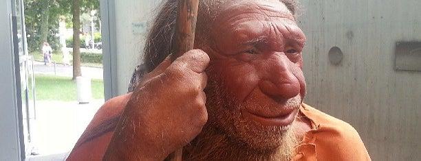 Neanderthal Museum is one of Köln.